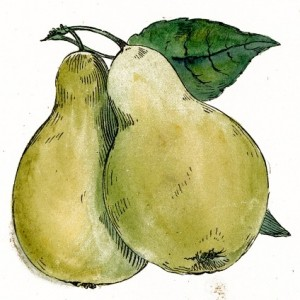 Public_Domain_Pear_Drawing