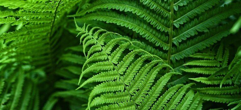 Каталог цветочно-декоративных растений с открытой корневой системой, реализуемых в 2021 году